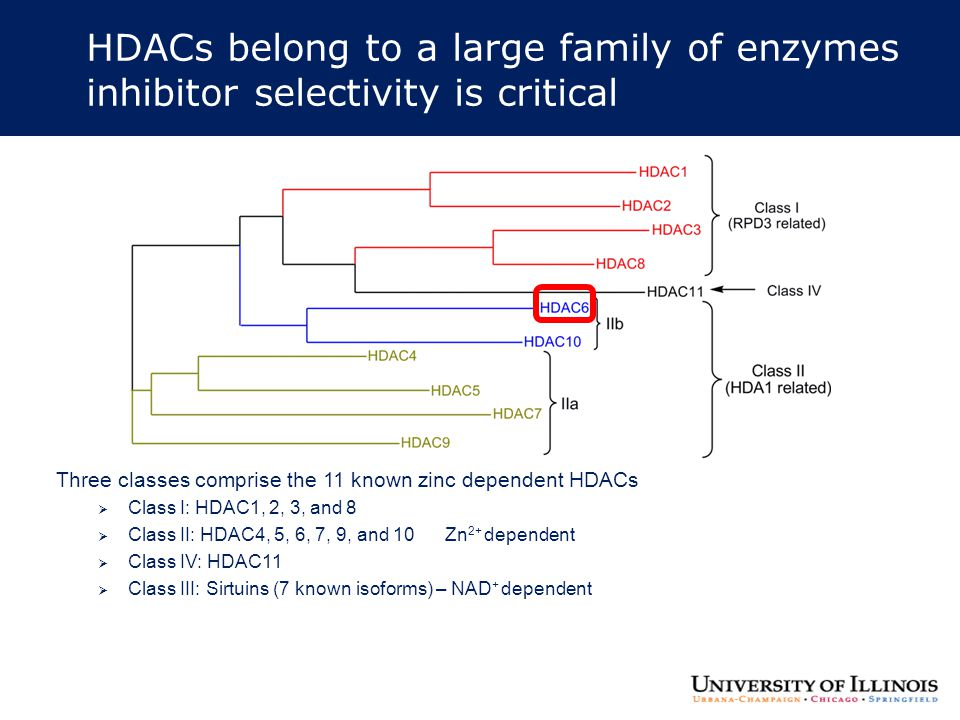 HDACs belong to a large family of enzymes inhibitor selectivity is critical