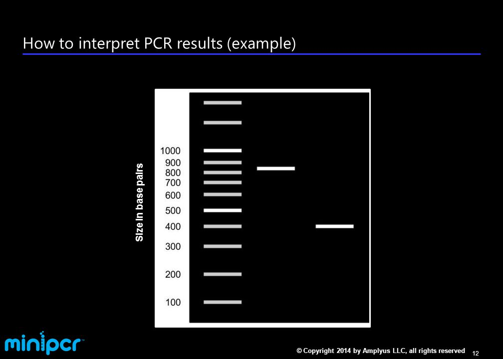 What goes in a PCR reaction