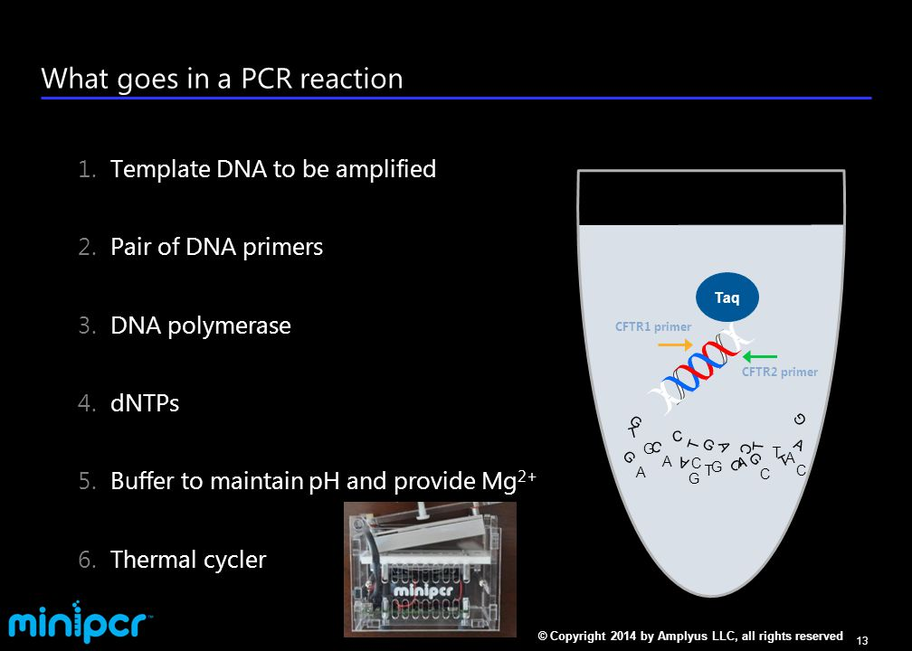 Setting up your PCR reactions Label 2 PCR tubes per group