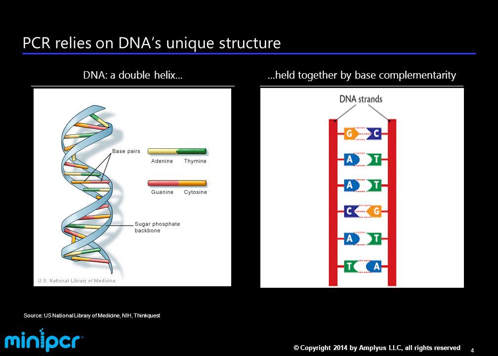 How PCR works: 3 steps to copy DNA