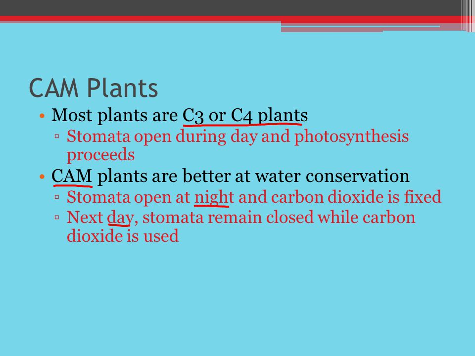 CAM Plants Most plants are C3 or C4 plants