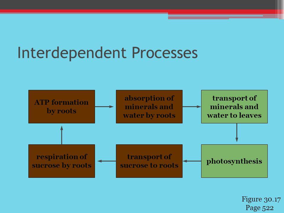 Interdependent Processes