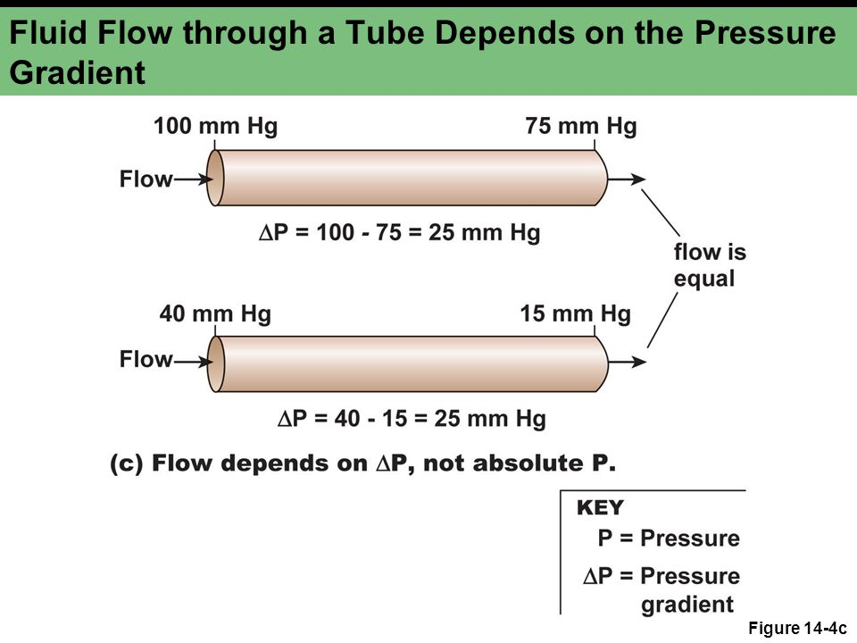 Fluid Flow through a Tube Depends on the Pressure Gradient