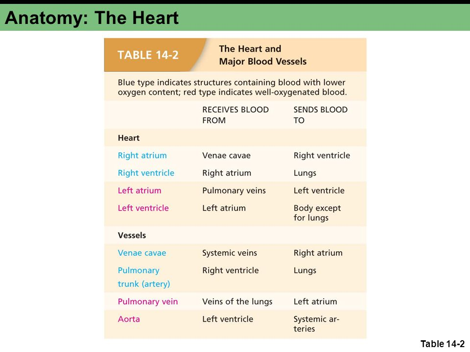 Anatomy: The Heart Table 14-2