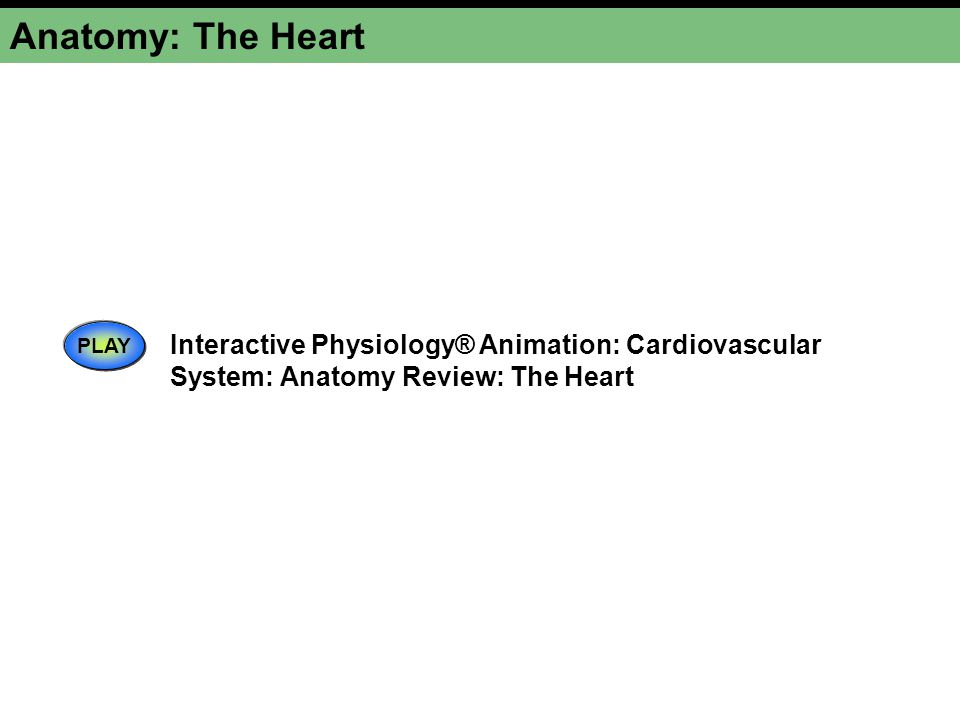 Anatomy: The Heart PLAY.