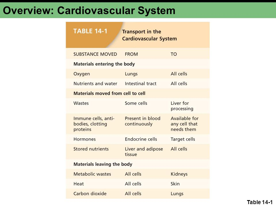 Overview: Cardiovascular System