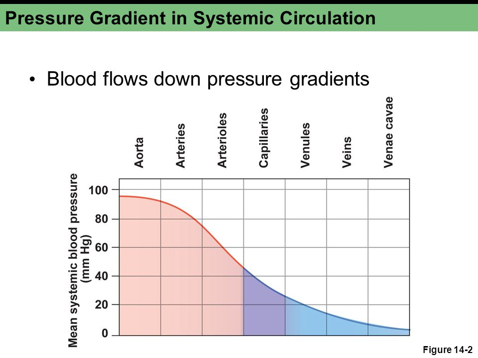 Pressure Gradient in Systemic Circulation