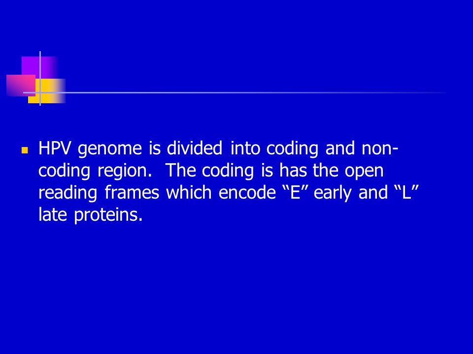 HPV genome is divided into coding and non-coding region