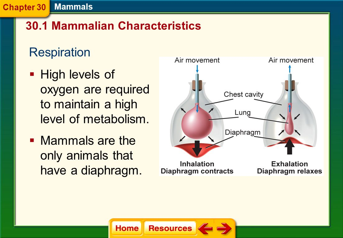 Mammals are the only animals that have a diaphragm.