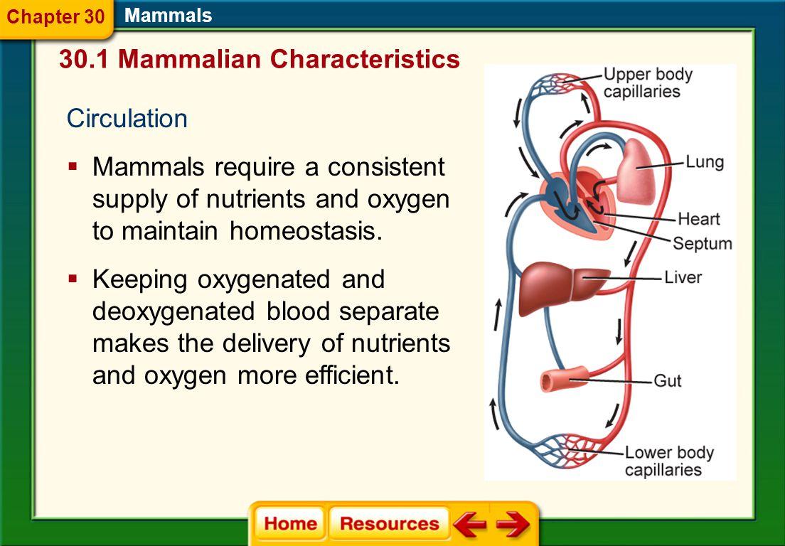 30.1 Mammalian Characteristics