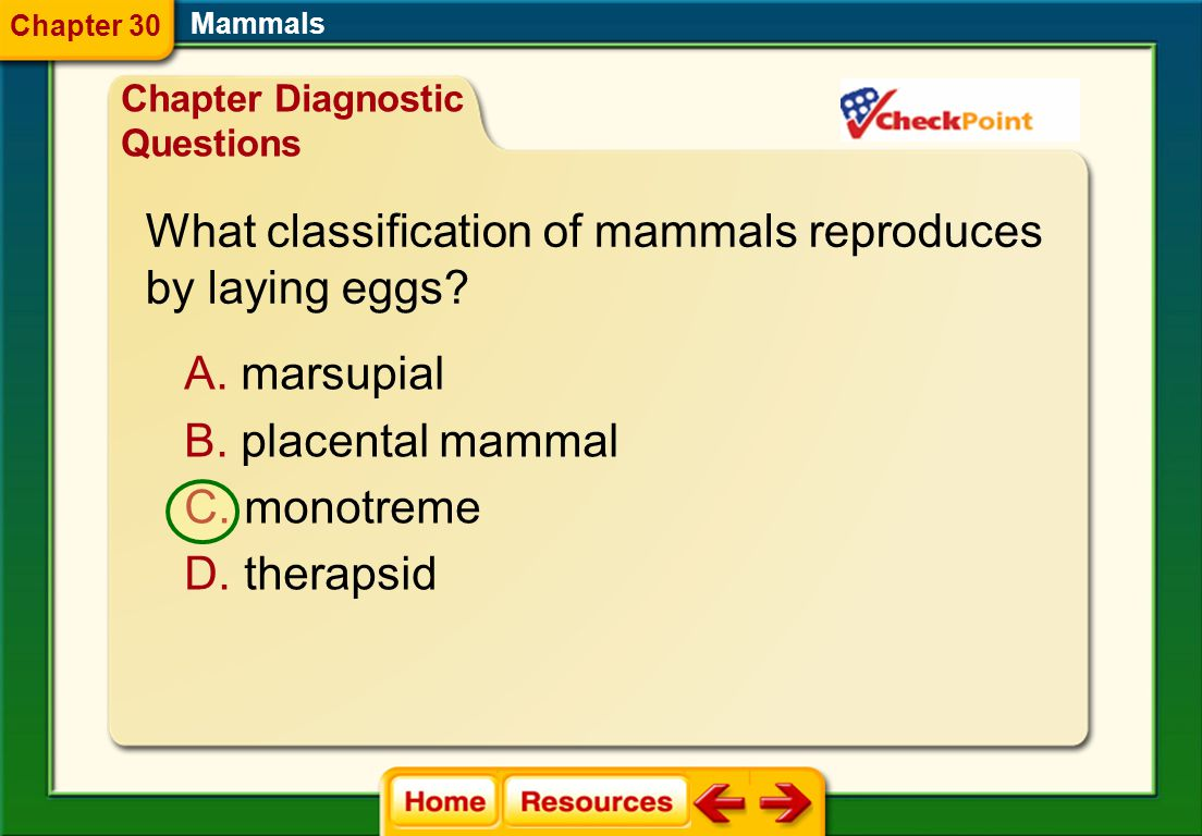 What classification of mammals reproduces by laying eggs