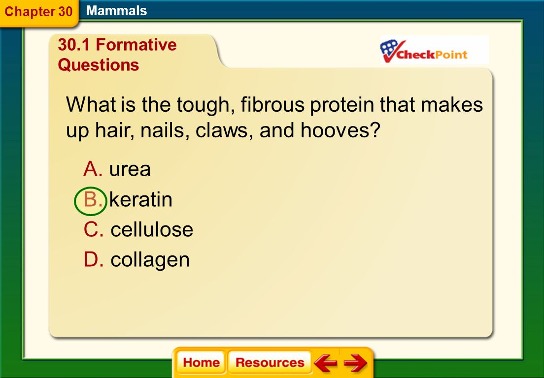 What is the tough, fibrous protein that makes
