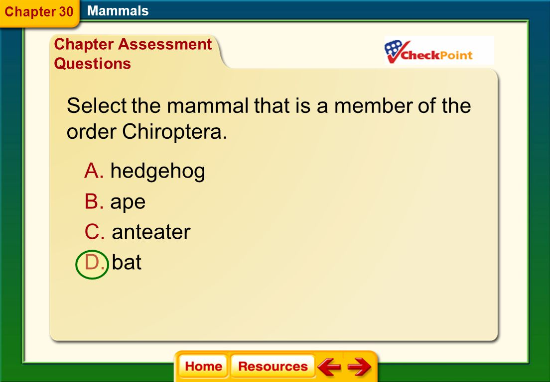 Select the mammal that is a member of the order Chiroptera.