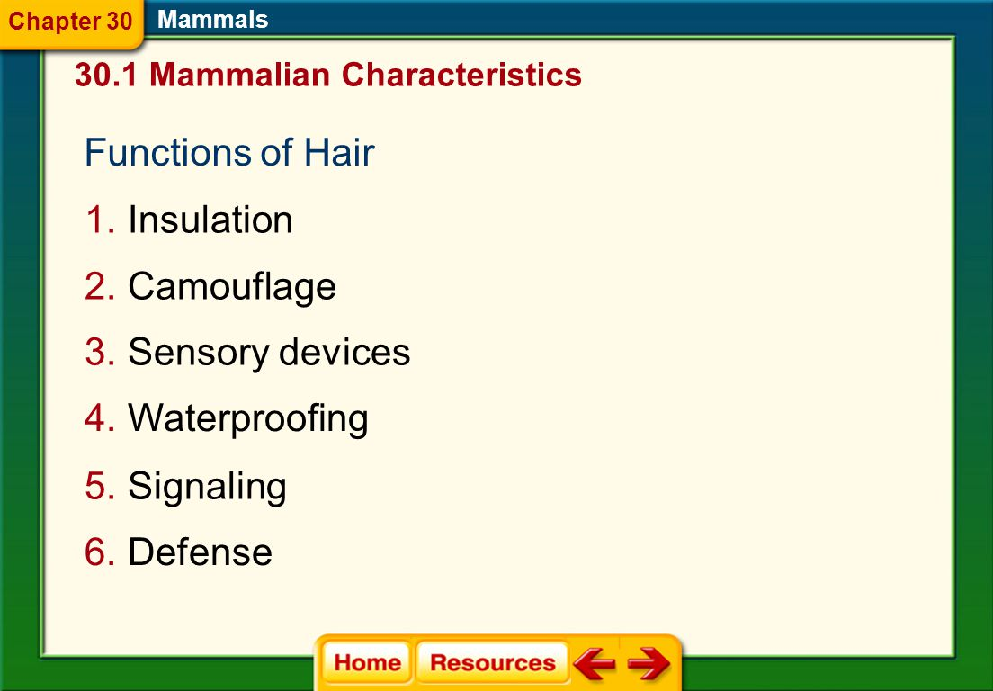 Functions of Hair Insulation Camouflage Sensory devices Waterproofing