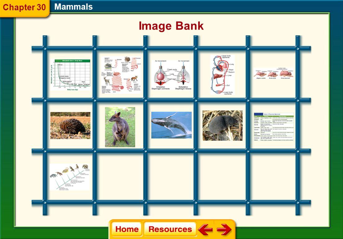 Chapter 30 Mammals Image Bank