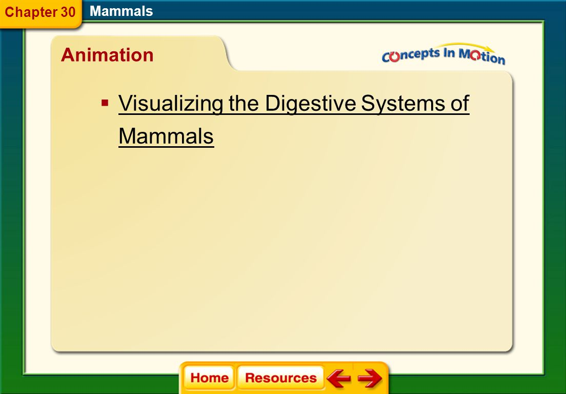 Visualizing the Digestive Systems of Mammals