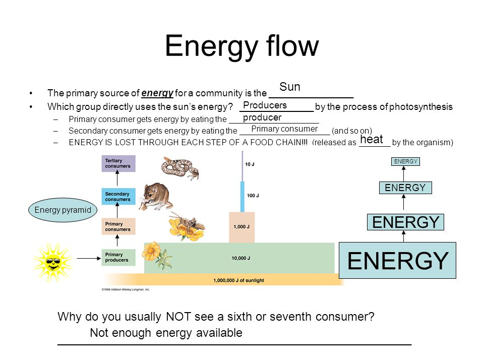 Energy flow ENERGY ENERGY Sun heat