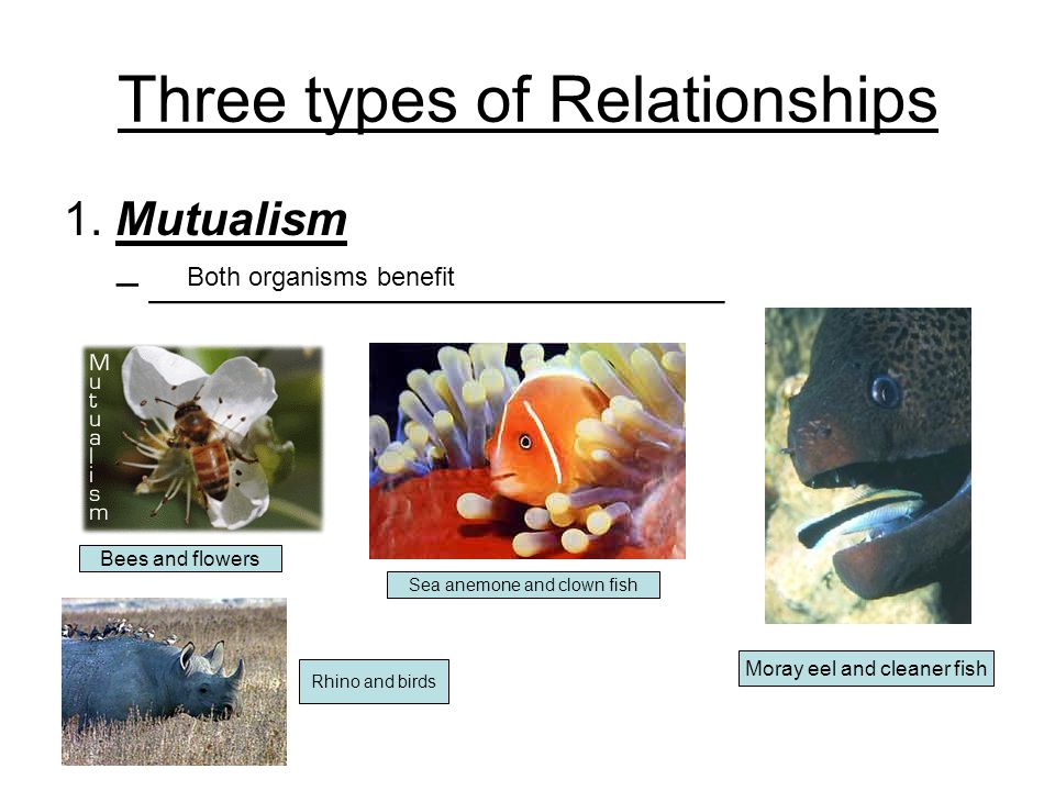Three types of Relationships