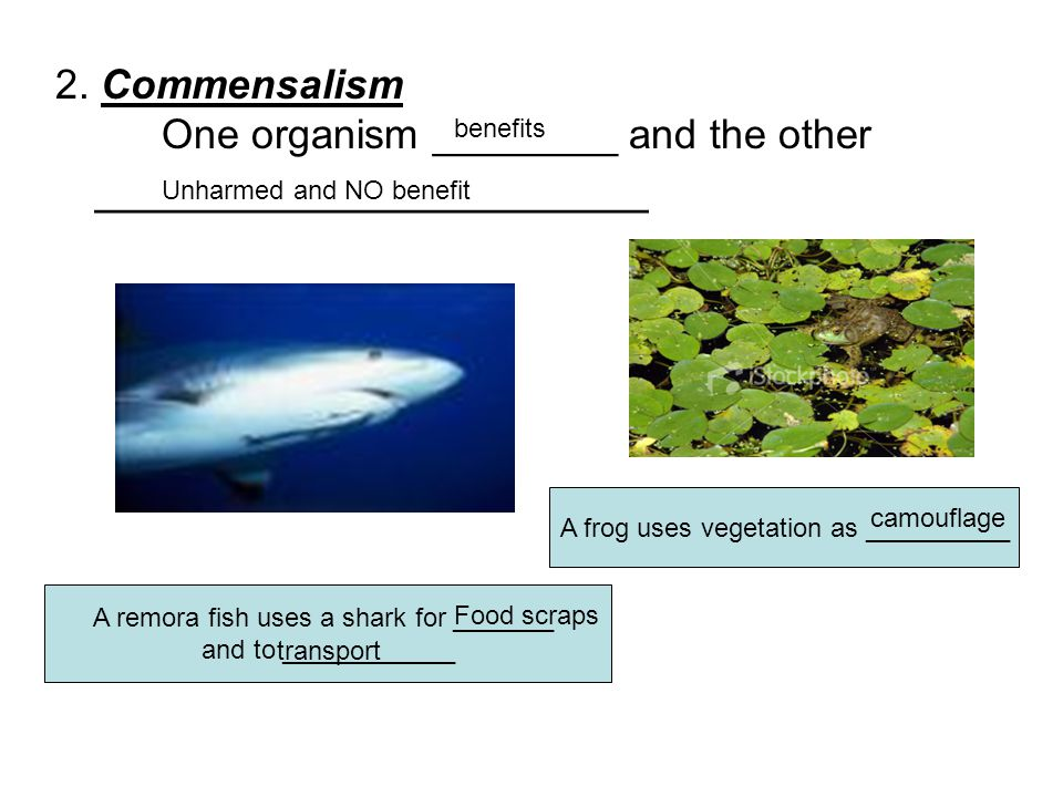 2. Commensalism. One organism ________ and the other