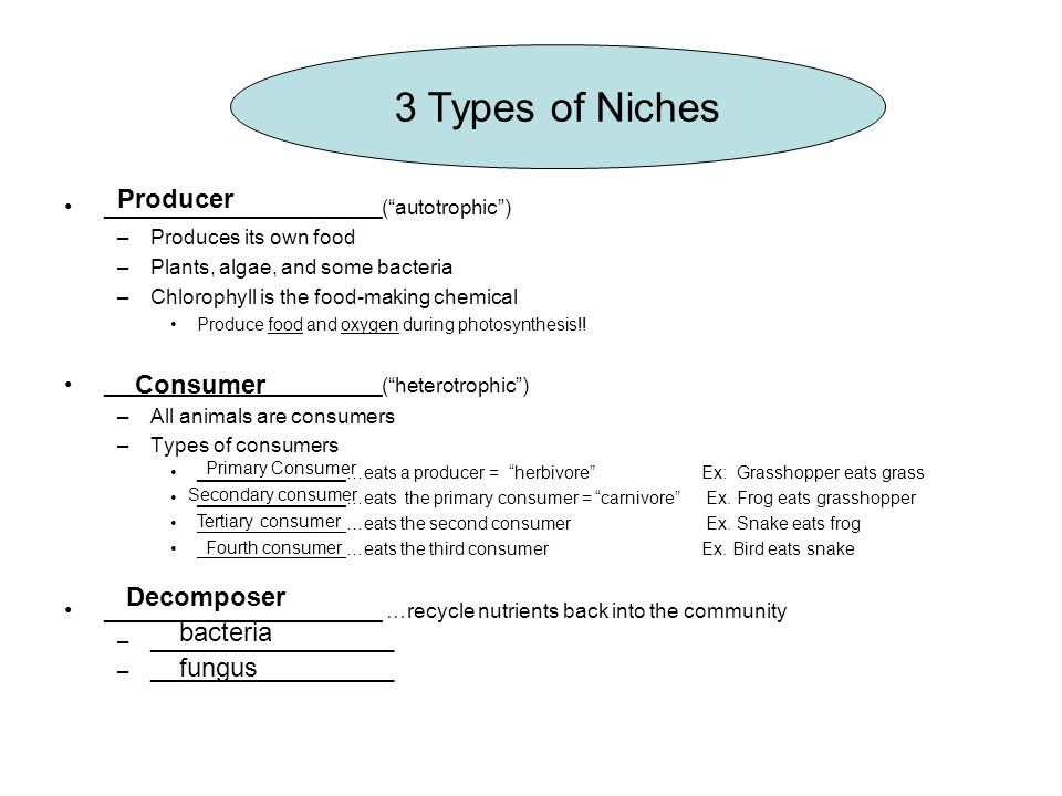 3 Types of Niches Producer Consumer Decomposer bacteria fungus