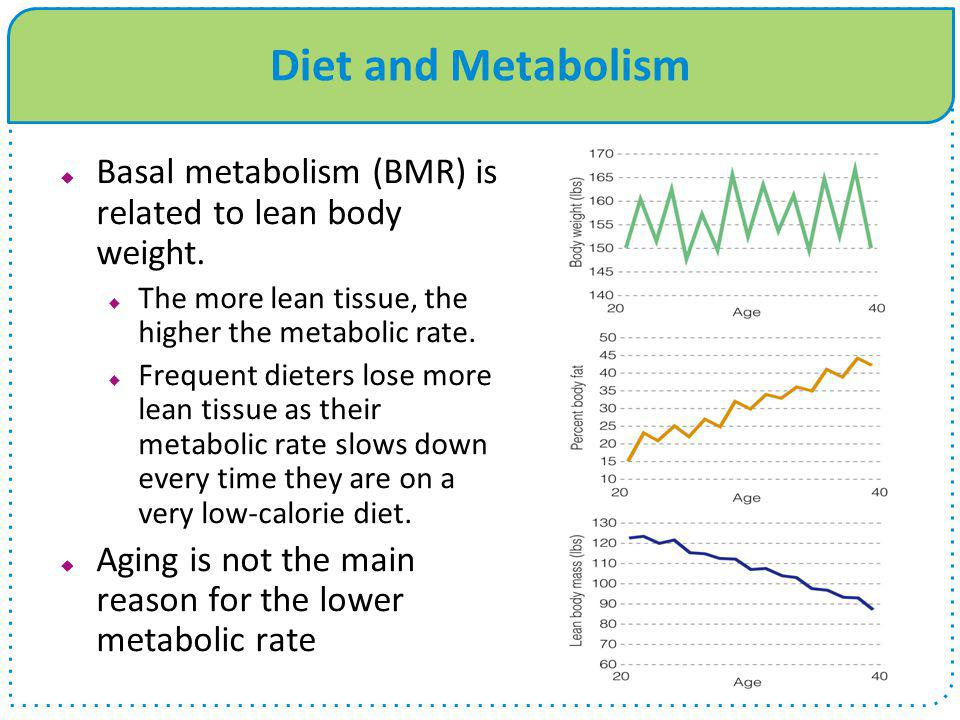 Diet and Metabolism Basal metabolism (BMR) is related to lean body weight. The more lean tissue, the higher the metabolic rate.