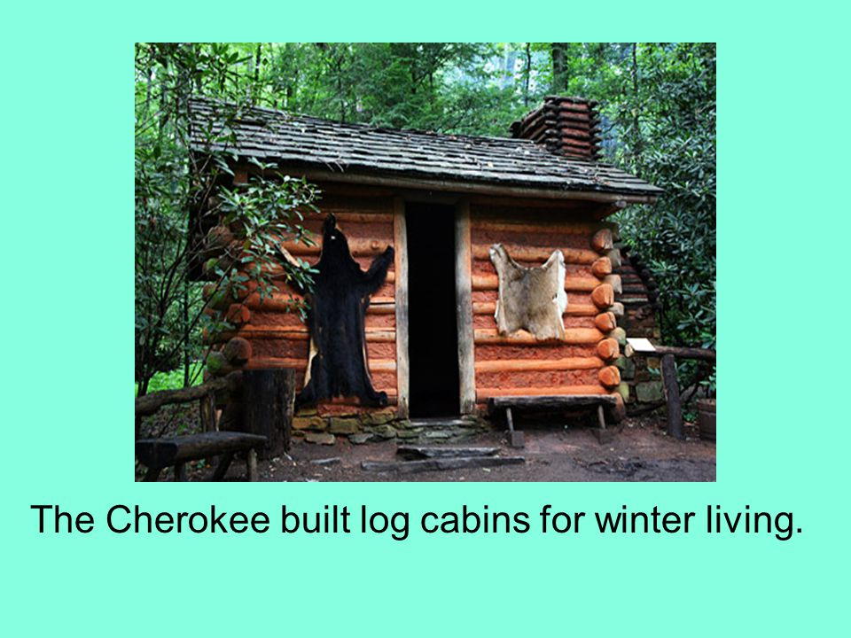 The Cherokee built log cabins for winter living.