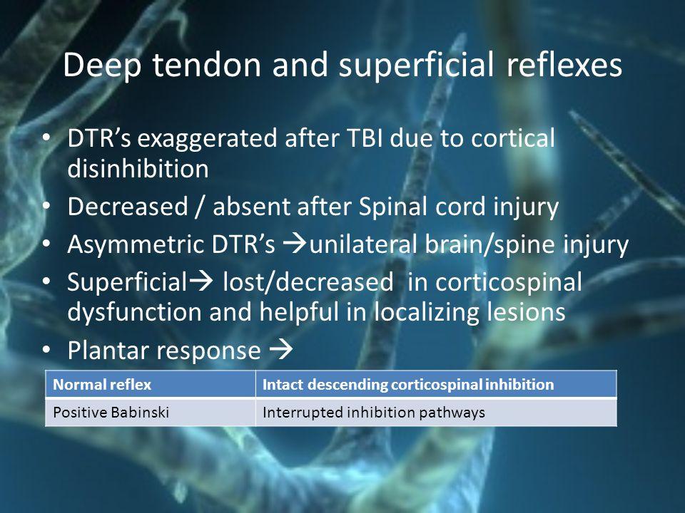 Deep tendon and superficial reflexes