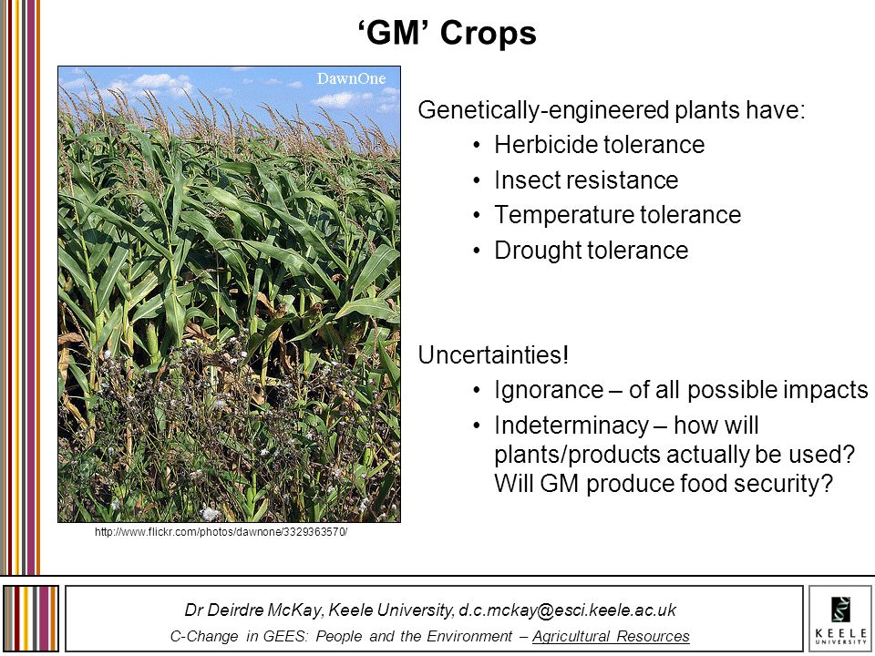 'GM' Crops Genetically-engineered plants have: Herbicide tolerance