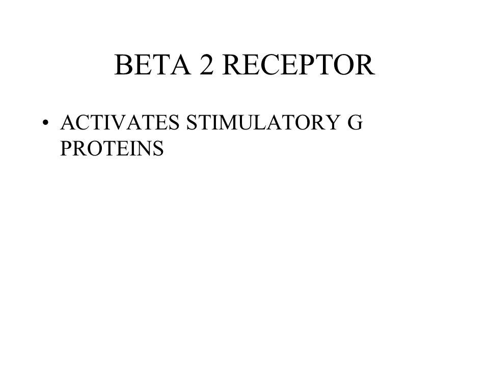 BETA 2 RECEPTOR ACTIVATES STIMULATORY G PROTEINS