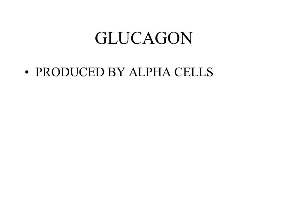 GLUCAGON PRODUCED BY ALPHA CELLS