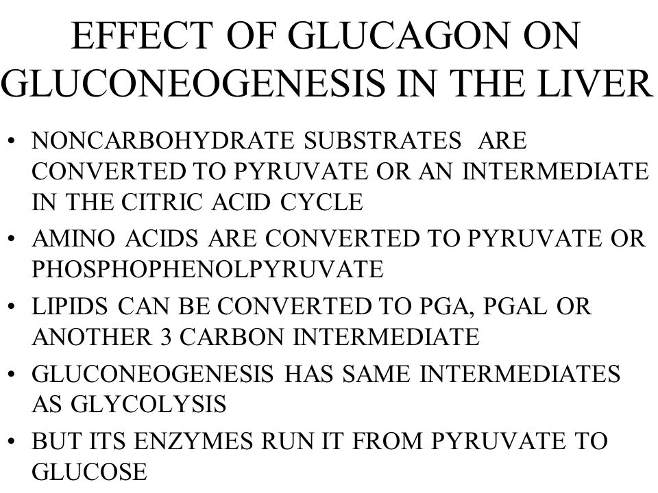 EFFECT OF GLUCAGON ON GLUCONEOGENESIS IN THE LIVER