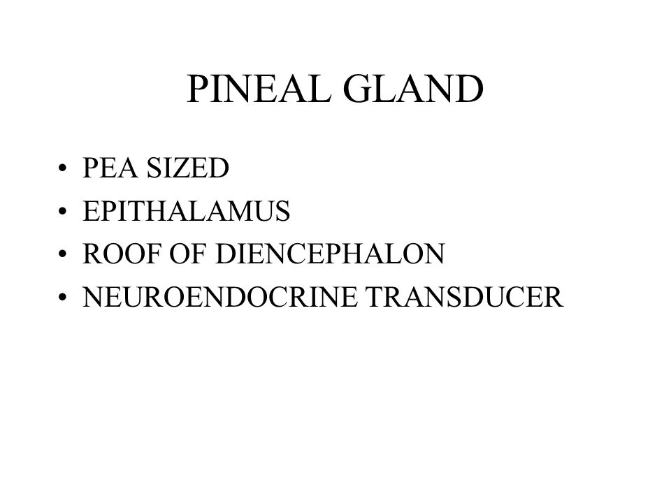 PINEAL GLAND PEA SIZED EPITHALAMUS ROOF OF DIENCEPHALON