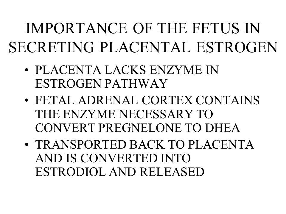 IMPORTANCE OF THE FETUS IN SECRETING PLACENTAL ESTROGEN
