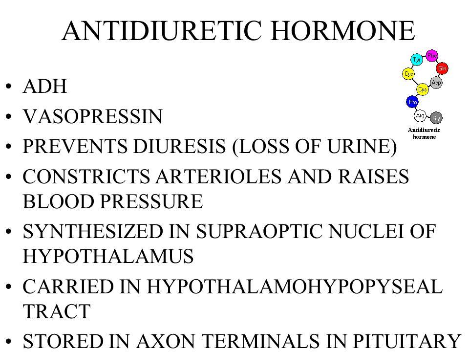 ANTIDIURETIC HORMONE ADH VASOPRESSIN PREVENTS DIURESIS (LOSS OF URINE)