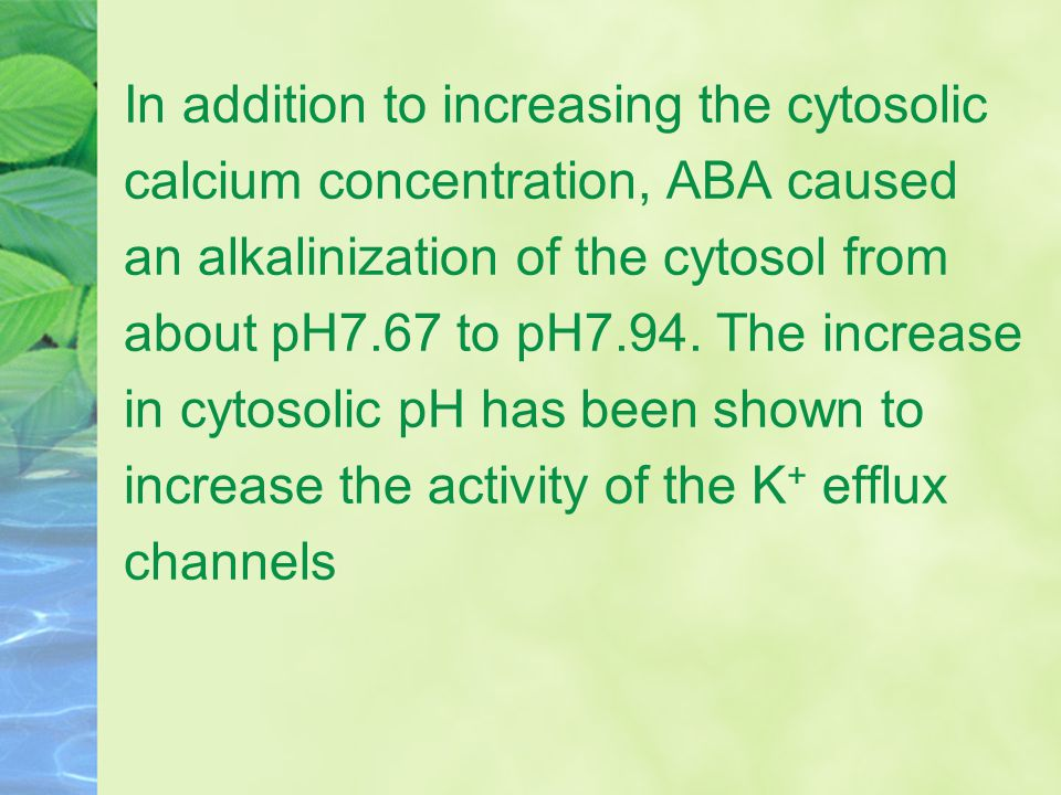 In addition to increasing the cytosolic