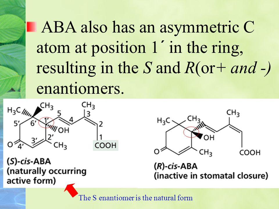 ABA also has an asymmetric C atom at position 1´ in the ring, resulting in the S and R(or+ and -) enantiomers.