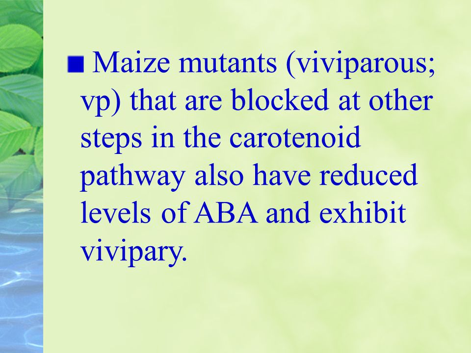 Maize mutants (viviparous; vp) that are blocked at other steps in the carotenoid pathway also have reduced levels of ABA and exhibit vivipary.