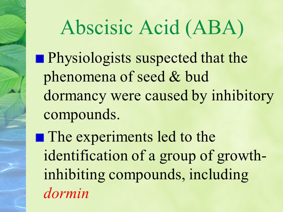 Abscisic Acid (ABA) Physiologists suspected that the phenomena of seed & bud dormancy were caused by inhibitory compounds.