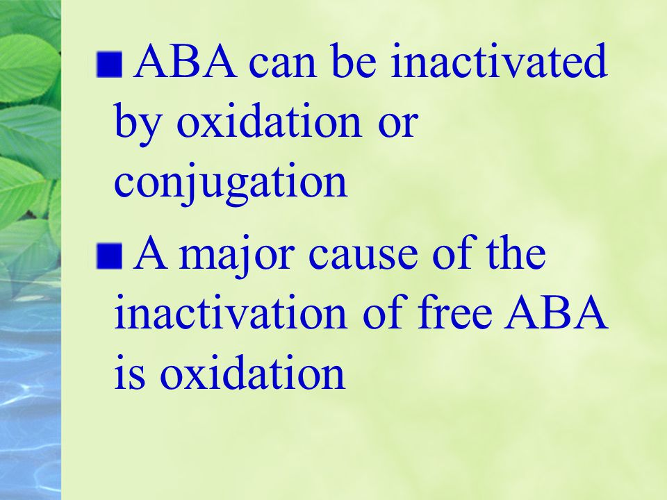 ABA can be inactivated by oxidation or conjugation