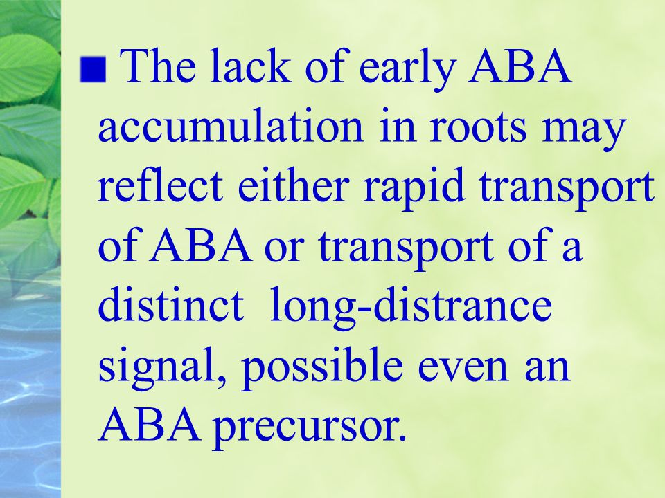 The lack of early ABA accumulation in roots may reflect either rapid transport of ABA or transport of a distinct long-distrance signal, possible even an ABA precursor.