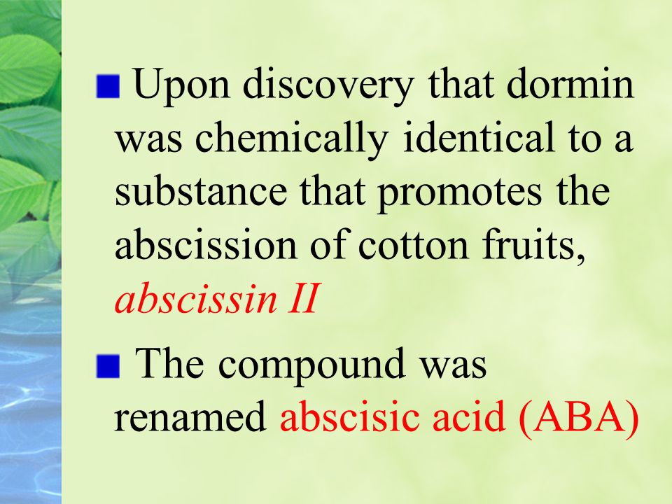 Upon discovery that dormin was chemically identical to a substance that promotes the abscission of cotton fruits, abscissin II