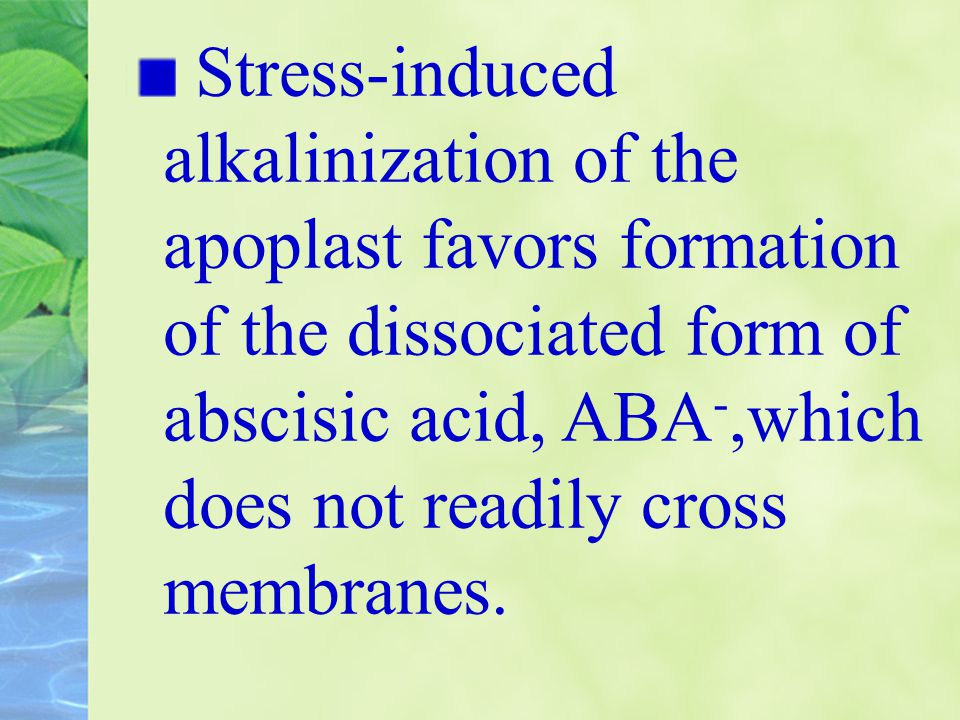 Stress-induced alkalinization of the apoplast favors formation of the dissociated form of abscisic acid, ABA-,which does not readily cross membranes.
