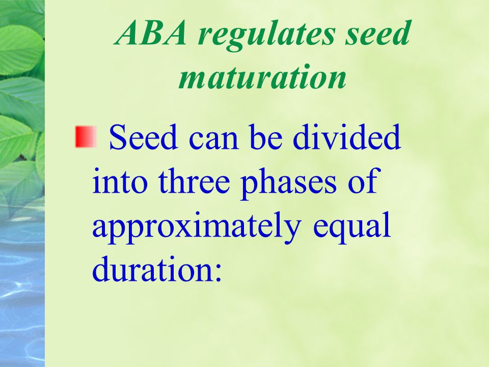 ABA regulates seed maturation