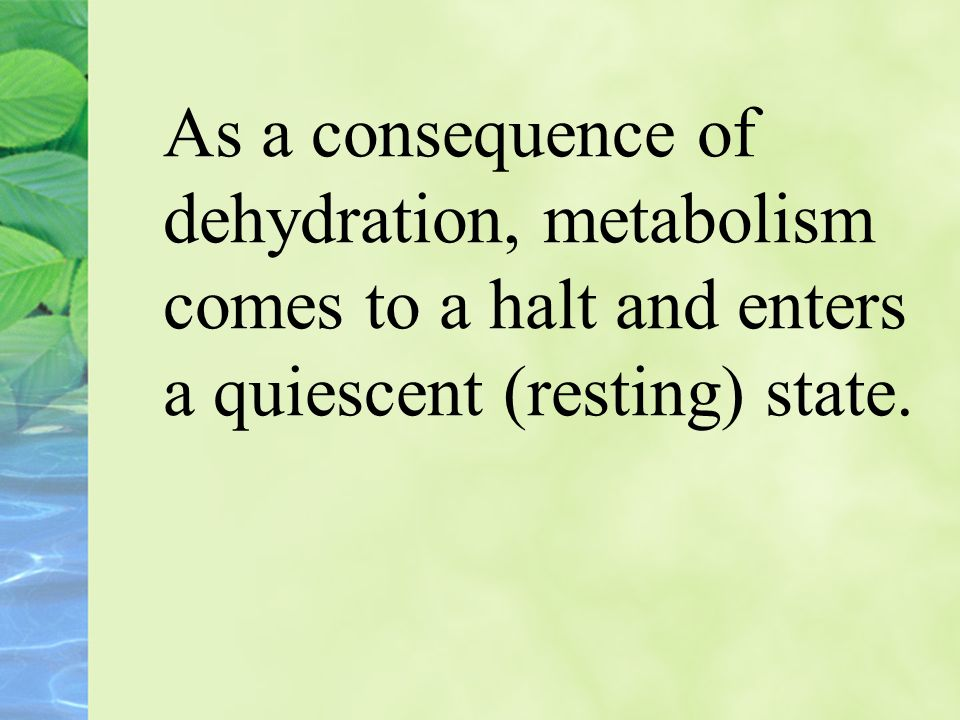 As a consequence of dehydration, metabolism comes to a halt and enters a quiescent (resting) state.