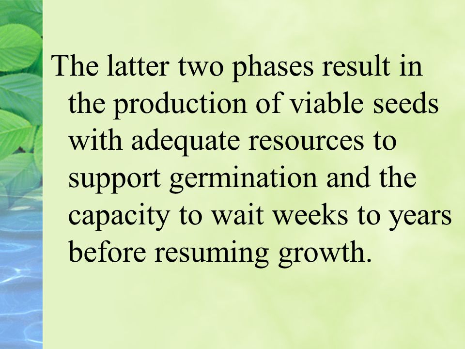 The latter two phases result in the production of viable seeds with adequate resources to support germination and the capacity to wait weeks to years before resuming growth.