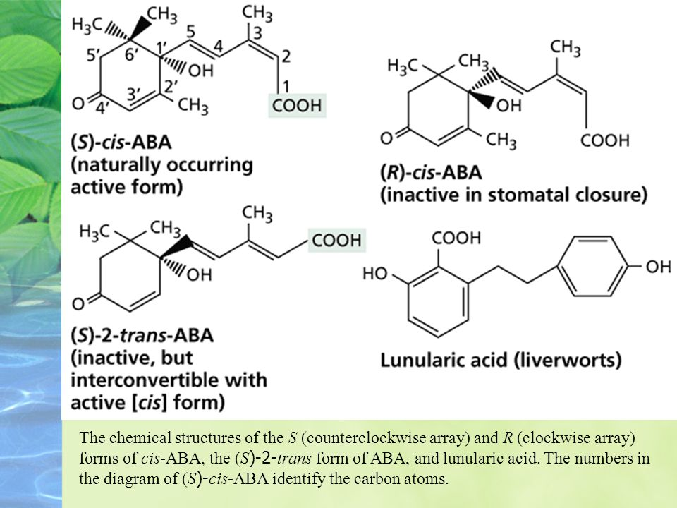 The chemical structures of the S (counterclockwise array) and R (clockwise array) forms of cis-ABA, the (S)-2-trans form of ABA, and lunularic acid.
