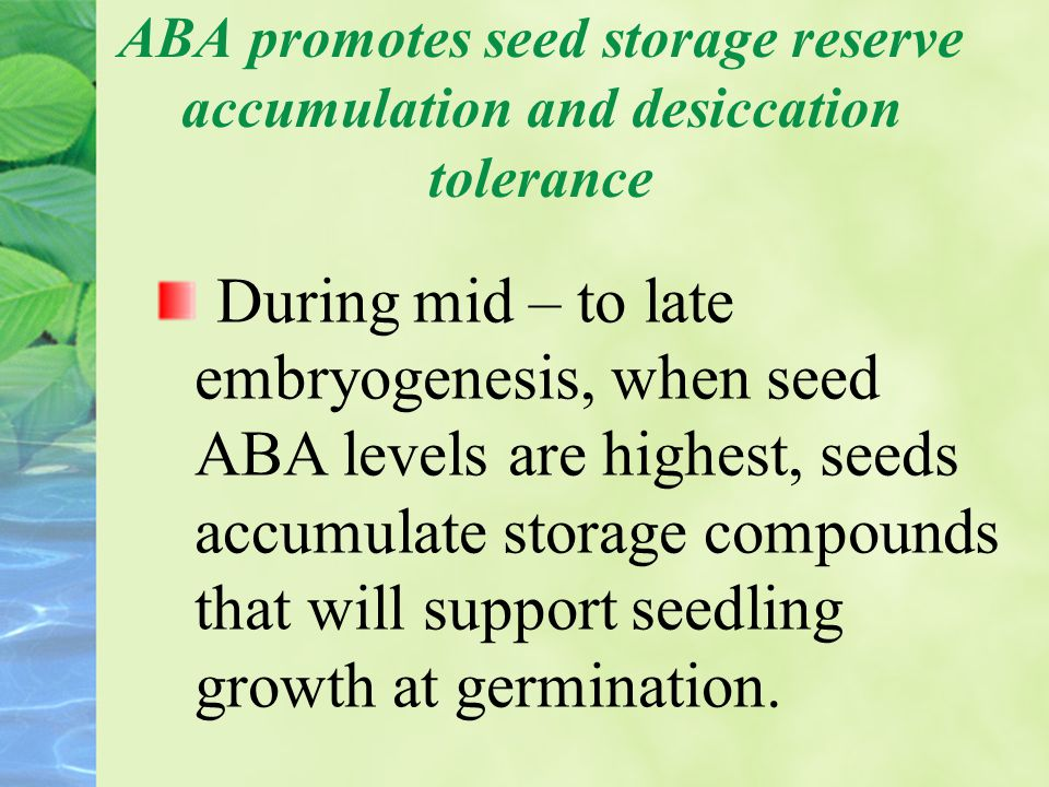 ABA promotes seed storage reserve accumulation and desiccation tolerance