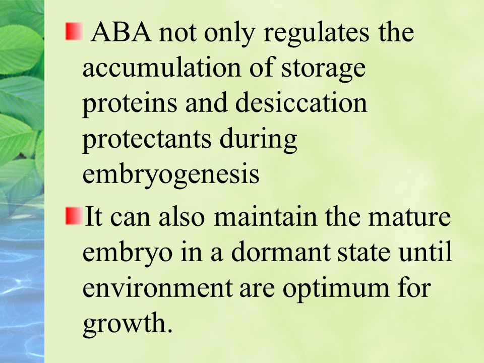 ABA not only regulates the accumulation of storage proteins and desiccation protectants during embryogenesis