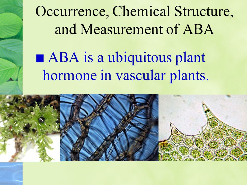 Occurrence, Chemical Structure, and Measurement of ABA