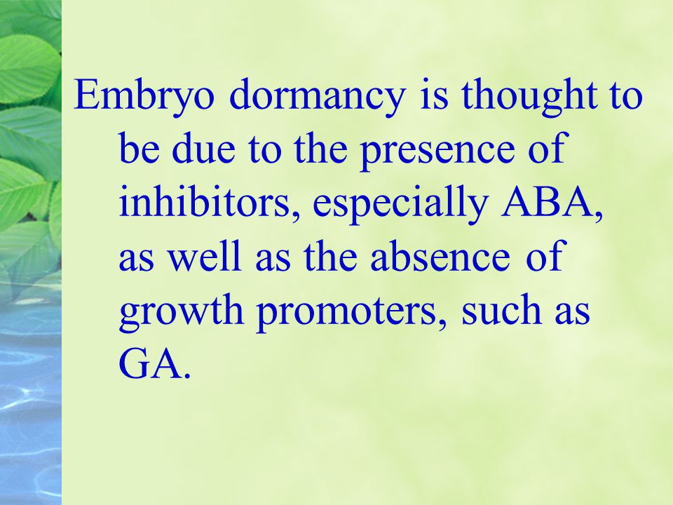 Embryo dormancy is thought to be due to the presence of inhibitors, especially ABA, as well as the absence of growth promoters, such as GA.